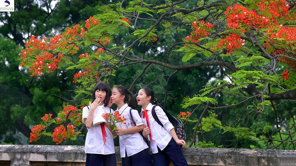 RED BLOSSOMS LIGHT UP  VIETNAM CITIES