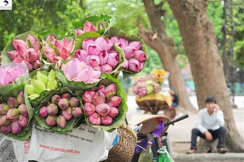 HANOI: HAWKERS ON BICYCLES PEDDLE FRAGRANCE ON THE GO